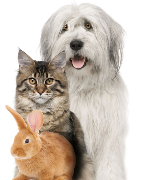 Pet Health Plan for dogs, cats and rabbits